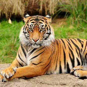 India - Tiger Tour