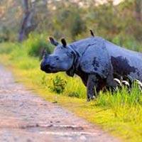 India's Wildlife - A Photography Tour