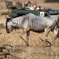 9 Nights Zambia - Affordable Safari Tour