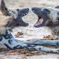 Livingstone, Kafue, Lower Zambezi & South Luangwa National Parks Safari Package