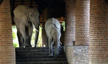 6 Days Victoria Falls & South Luangwa - Zambia tour