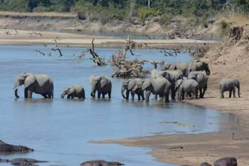 7 Days – Exciting Affordable Zambia Safari Tour