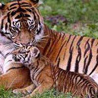 Uttarakhand Wildlife Tour