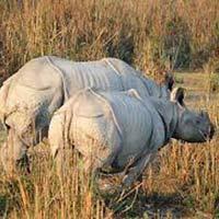 Wildlife Of Kaziranga Tour
