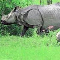 Kaziranga Rhino Tour