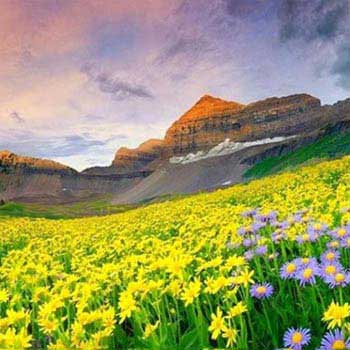 3 Nights Valley of Flowers Package
