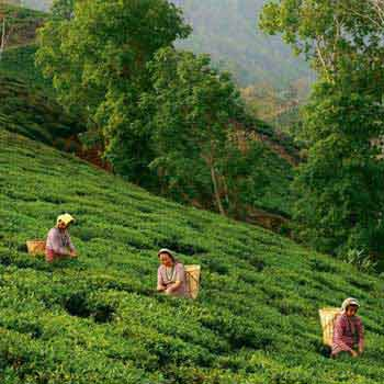 Darjeeling Holiday Packages