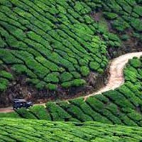 A Weekend with Munnar Greenery  3 Days / 2 Nights Tour
