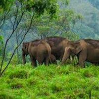 A Journey to Kerala Wilderness 6 Days / 5 Nights