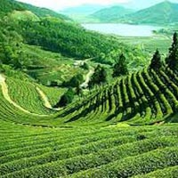 05 Days/04 Nights Gangtok Darjeeling Tour