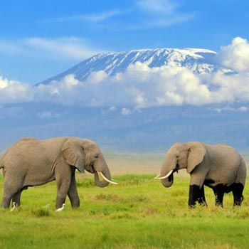 Amboseli Overnight Safari 2-Day Tour