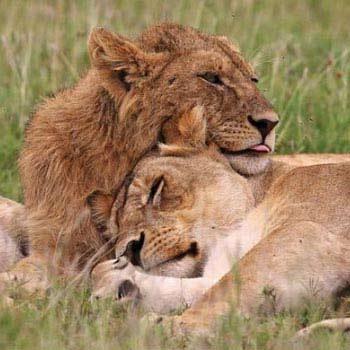 Amboseli - Lake Naivasha & Masai Mara Safari - 5 Days Tour