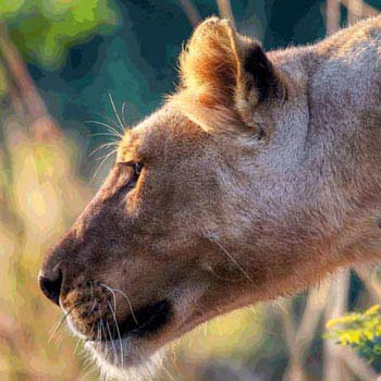 Amboseli - Lakes Naivasha & Nakuru - Masai Mara - 6 Days Tour