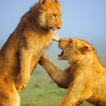 Masai Mara - Lake Nakuru - Lake Naivasha - Amboseli - Tsavo West - Tsavo East - 9 Day Tour