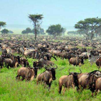 The Great Migration Kenya & Tanzania Fly-N-Stay Tour