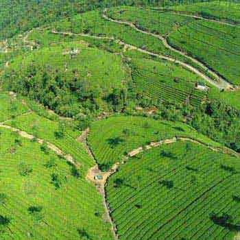 Cochin - Munnar - Thekkady - Cochin Tour