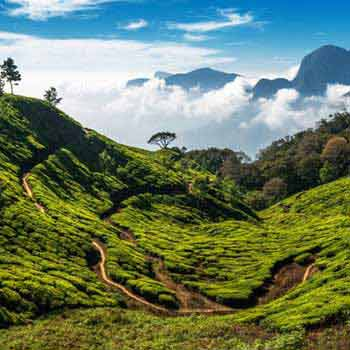Hills Of Bengal Tour