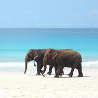 Romantic Andaman Package