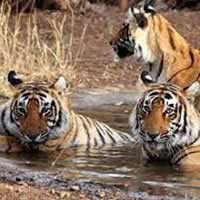 Luxury Golden Triangle Tour with Tiger