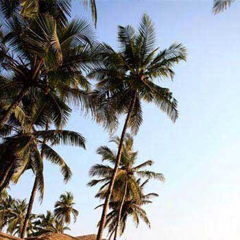 Beach Holiday, Goa Package