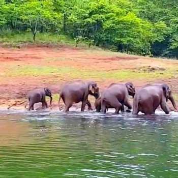 Kerala Periyar Trip Tour