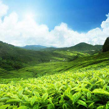 Tea Route Package