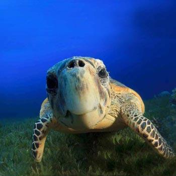 Mauritius Aquarium Package