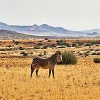 7 Days Circuit Budget Safari Lake Nakuru,Maasai Mara,Isebania,Serengeti and Ngorongoro Crater Packag