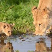 Best of Kenya and Tanzania Budget Safari Maasai Mara,Lake Nakuru,Amboseli,Arusha, Tour