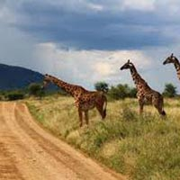 Group Joining Maasai Mara/ Lake Nakuru/ Amboseli/ Arusha Tarangire/ Ngorongoro/ Serengetti/ Tour