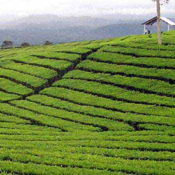 Tea Cities of India Package