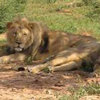 Wildlife Safari in Gujarat Package