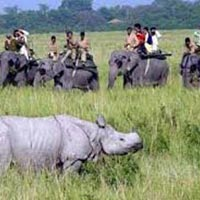Kaziranga Wildlife Tour