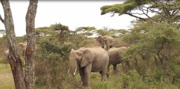 5 Days migration Safaris, Northern Tanzania