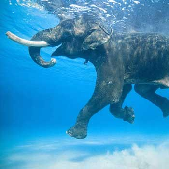 Andaman Extreme For 12 Nights And 13 Days Tour