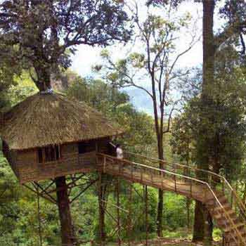 Best of Kerala with Treehouse Stay Tour