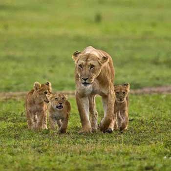 Wildlife Tour of Kenya