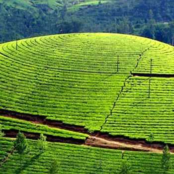 Premium Kerala Tour Package - 3