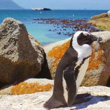 Cape Town South Africa Tour 3N/4D