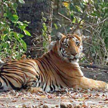 Wildlife in South India Package