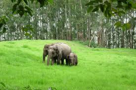 Madurai - Munnar - Thekkady - Periyar - Allepey Tour
