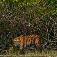 Sundarbans Sightseeing Highlights Tour