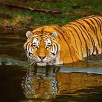 Short Escape to Sundarbans Package