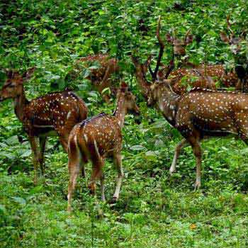 Short Escape to Periyar Package