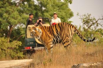 Golden Triangle with Ranthambore Package Tour
