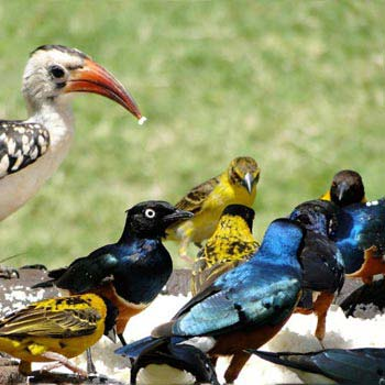 Nairobi - Birdwatching Day Trip Package