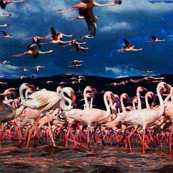 Lake Nakuru National Park Safari Package