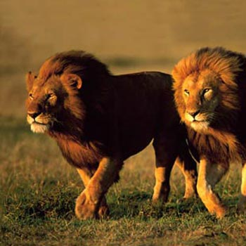 Masai Mara 3 Day Safari Tour