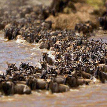 Wildebeest Migration Shared Tour