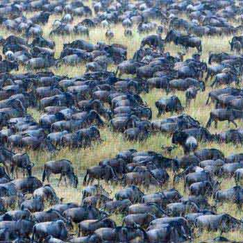 3 Days Wildebeest Tracking Safari Tour